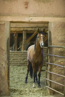 Quarter Horse in Stable by DLILLC