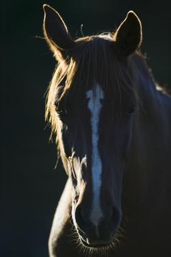 Quarter Horse by DLILLC