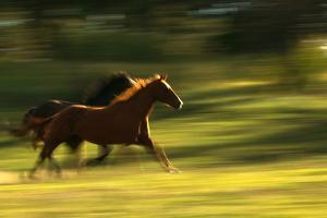 Quarter Horses Running by DLILLC