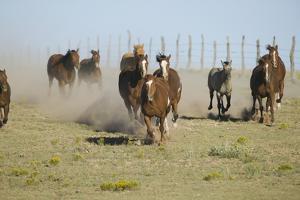 Quarter Horses Running by DLILLC