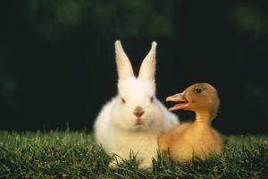 Rabbit and Duckling Friends by DLILLC