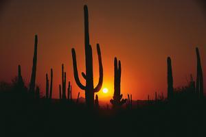 Sun Setting behind Cacti by DLILLC