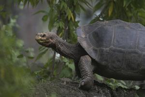Tortoise next to Plants by DLILLC