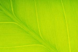 Veins in Leaf by DLILLC