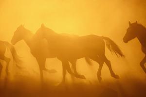 Wild Horses by DLILLC