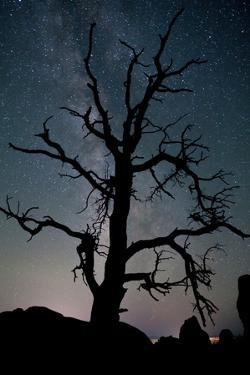 A Gnarly Tree in Silhouette Against the Milky Way in Arches National Park by Dmitri Alexander