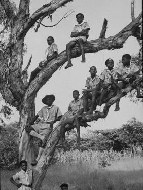 Boy Scout Troop Sitting in a Tree by Dmitri Kessel