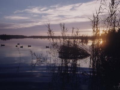 Texas Duck Hunting by Dmitri Kessel