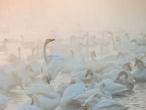 Song of the Morning Light by Dmitry Dubikovskiy