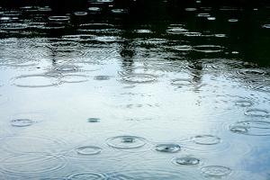 Rainy Weather by Dmitry Naumov