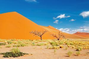 Namib Desert, Sossusvlei, Namibia by DmitryP