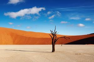 Namib Desert by DmitryP