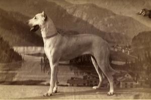 Dog, 1870-80