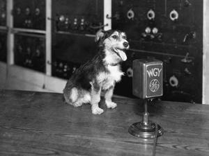 Dog at Wgy Radio Microphone