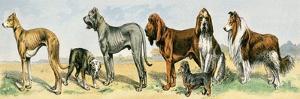 Dog Breeds: Greyhound, Bulldog, Great Dane, Bloodhound, Dandie Dinmont, Griffon, and Collie