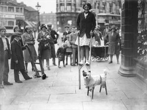 Dog on Stilts!