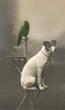 Dog on Table with Green Parrot