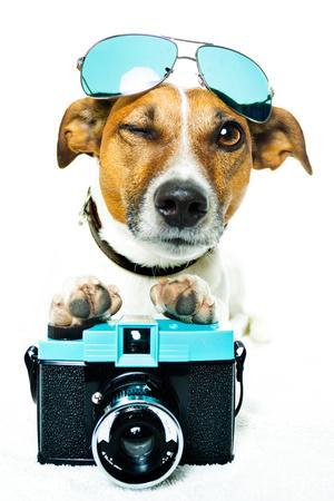 https://imgc.allpostersimages.com/img/posters/dog-photo-camera_u-L-Q10345P0.jpg?p=0
