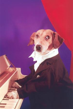 https://imgc.allpostersimages.com/img/posters/dog-playing-piano_u-L-PZRM310.jpg?p=0