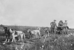 Dog Team pulling a Railroad Cart Photograph - Nome, AK