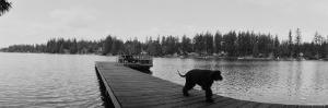 Dog Walking on the Pier, Bellevue, Washington State, USA