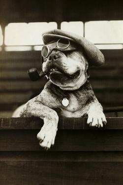 Dog Wearing Hat and Goggles