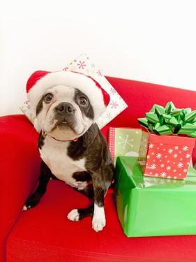 Dog wearing Santa Claus hat next to gifts