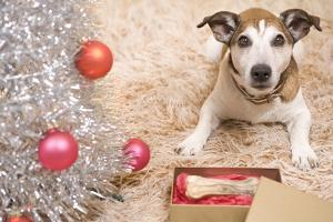 Dog with Present by Christmas Tree