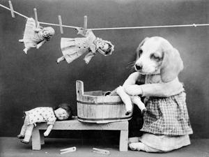 Doggy Laundress