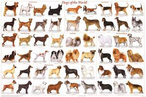Dogs of the World Educational Science Chart Poster
