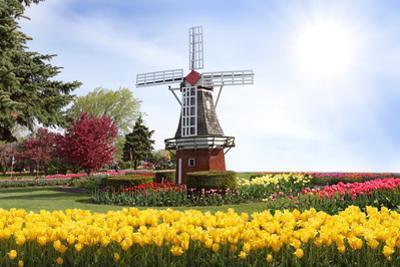 Windmill by Dole