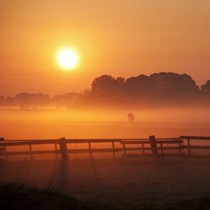 Misty Morning by Dollia Sheombar