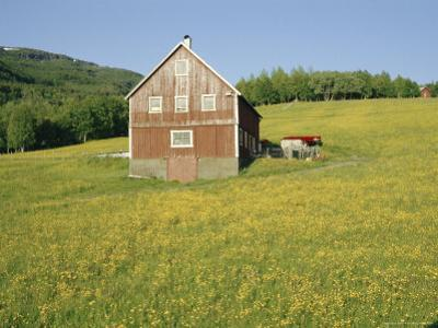 Barn in Rape Field in Summer, Lofoten, Nordland, Arctic Norway, Scandinavia, Europe