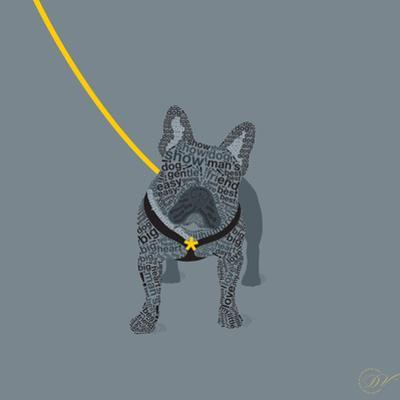 French Bulldog on Grey
