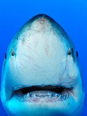 Shark by Don Carpenter of eurisko Photography