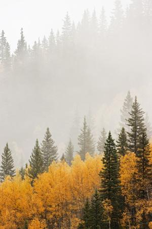 Mountain Fog in Colorado by Don Grall