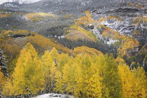 USA, Colorado, San Juan Mountains. Autumn Snowfall on Forest by Don Grall