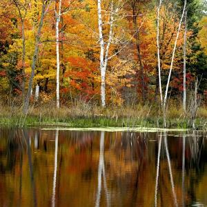 Autumn Colour Reflected in a Beaver Pond, Point Au Baril, Ontario, Canada. by Don Johnston