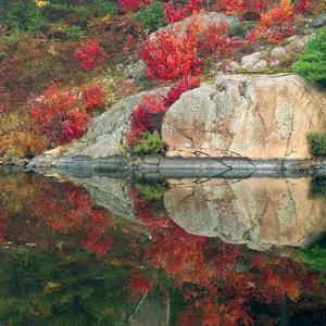 Autumn Colour Reflected in Murdock River, Sudbury, Ontario, Canada. by Don Johnston