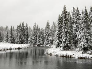 Fresh, Heavy, Wet Snow on Trees Along Banks of Junction Creek, Lively, Ontario, Canada. by Don Johnston