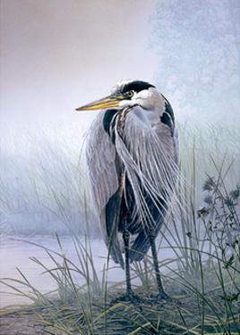 Brooding Heron by Don Li-Leger