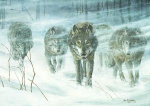 Wolfpack In Snowstorm by Don Li-Leger