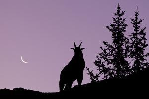Canada, Alberta, Elbow-Sheep Wildland Provincial Park, Highwood Pass, Mount Lipsett, Silhouette of by Don Paulson Photography