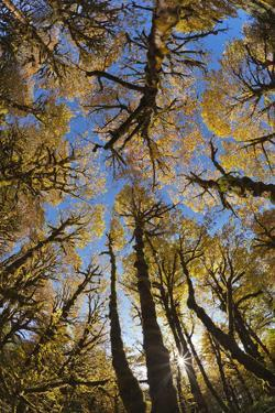 Usa, Washington State, Olympic National Park, Quinault River, Low Angle View of Trees in a Forest by Don Paulson Photography