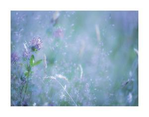 Summer Meadow by Don Paulson
