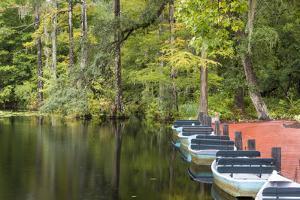 USA, South Carolina, Cypress Gardens. Boat Rental Dock in Swamp by Don Paulson