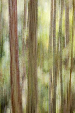 USA, Washington State, San Juan Islands. Abstract Woodland Scene by Don Paulson