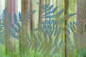 USA, Washington State, Seabeck. Collage of Bracken Ferns and Forest by Don Paulson