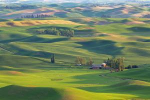 Washington State, Palouse Hills. Farmland Viewed from Steptoe Butte by Don Paulson