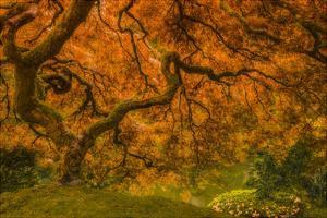 Radiant Maple I by Don Schwartz